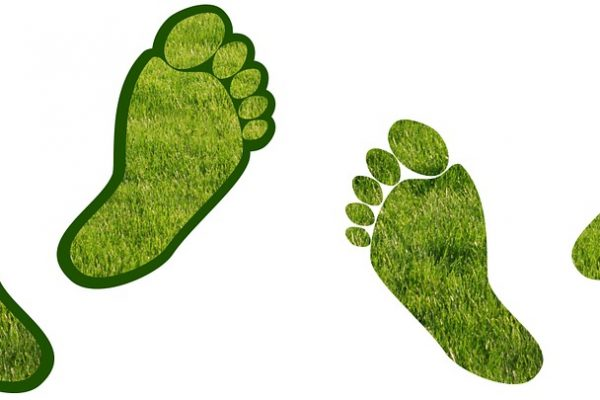 Reduce Your Carbon Footprint From Food
