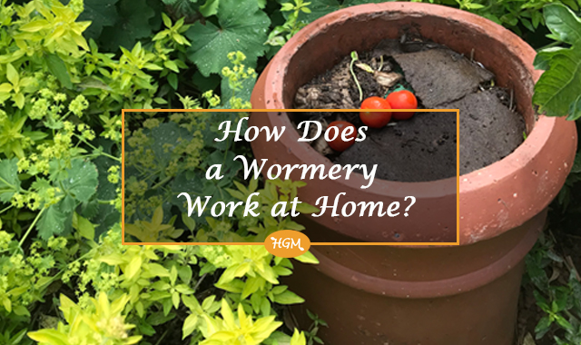 How does a wormery work at home
