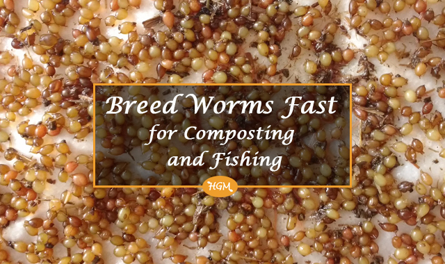 Breed worms fast for composting and fishing