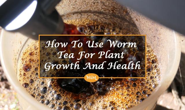 how to use worm tea